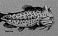 atelier-oasp-cedric-lestiennes-poissons