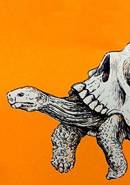 atelier-oasp-cedric-lestiennes-tortues
